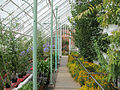 Arley greenhouse 3.jpg