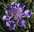 Arosa - flower 4.jpg