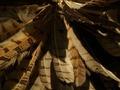 Arte de Norteamérica Dahlem 08.TIF