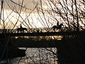 Attenborough Nature Reserve Horses on Barton Bridge - geograph.org.uk - 1126908.jpg