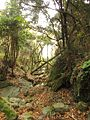 Autumn-deciduous forest.jpg