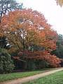 Autumn Colour by the Path at Westonbirt Arboretum - geograph.org.uk - 1013713.jpg