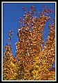 Autumn Leaves begin to fall-056 (5754453086).jpg