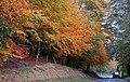 Autumn at Minnowburn near Belfast (2) - geograph.org.uk - 599595.jpg