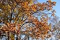 Autumn colors at old terminal B of Vladivostok International Airport. 11.jpg
