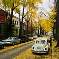 Autumn in Washington, D.C.jpg
