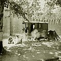 Avignon Verdine gitane aux remparts en 1935.jpg