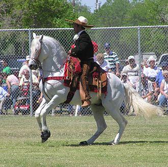 Azteca horse - Azteca horse