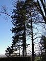 Bäume - panoramio (3).jpg