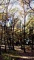 BOSCOS (BARRI MONTILIVI-PALAU) GIRONA - panoramio.jpg