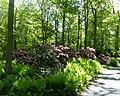 Bad Sassendorf – Rhododendronpark - panoramio.jpg