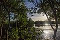 Bakhawan Eco-Park - panoramio (4).jpg
