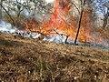Bandipur Forest fire1 2019.jpg