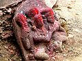 Barabar Caves - Temple Statues (9224741527).jpg