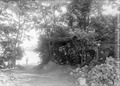 Baracke der Grabenwache im Wald am Rhein - CH-BAR - 3237272.tif