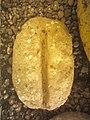 Batu Yoni Semu, Situs Carangadul.jpg