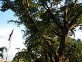 Bauan,Batangasjf9499 10.JPG