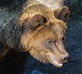 Bear-1772 (14983955506).jpg