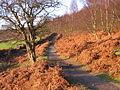 Below Birchen Edge - geograph.org.uk - 104396.jpg