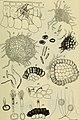 Berichte der Deutschen Botanische Gesellschaft (1884) (20179827749).jpg