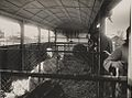 Better Farming Train pig truck.jpg