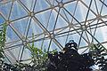 Biosphere 2015 01 18 0315.jpg