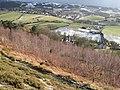 Birch forest - geograph.org.uk - 1151146.jpg