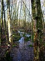 Birchden Wood - geograph.org.uk - 656243.jpg