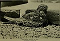 Bird lore (1914) (14775598683).jpg