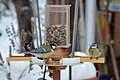 Birds at a birdfeeder in Botevgrad, Bulgaria 03.jpg