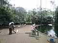 Birds in Zoo Negara Malaysia (2).jpg