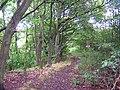 Birley Wood, Standish Lower Ground - geograph.org.uk - 47409.jpg