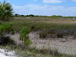 Black Point Wildlife Drive, Merritt Island FL - Flickr - Rusty Clark (227).jpg