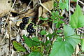 Blackberry-0861.jpg