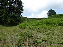 Blackborough End Pit 4.jpg