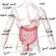 Blausen 0603 LargeIntestine Anatomy-ar.png