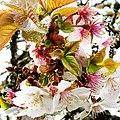Blossom (32275447).jpeg