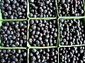 Blueberries for sale.jpg
