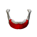 Body of mandible - close up - anterior view.png
