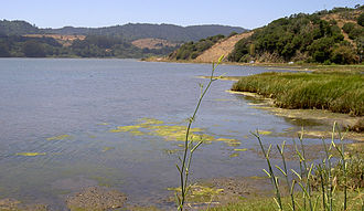 L. Martin Griffin - North end of Bolinas Lagoon, looking northwest from California State Route 1 near Audubon Canyon.