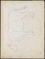 Bos gaurus - 1700-1880 - Print - Iconographia Zoologica - Special Collections University of Amsterdam - UBA01 IZ21200183.tif