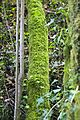 Bosque - Bertamirans - Rio Sar - 014.JPG