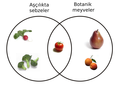 Botanical Fruit and Culinary Vegetables-tr.png