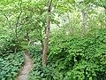 Botanischer Garten Freiburg - DSC06366.jpg