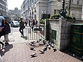 Bournemouth , Old Christchurch Road - Pigeons - geograph.org.uk - 1288979.jpg