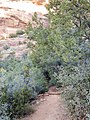 Boynton Canyon Trail, Sedona, Arizona - panoramio (24).jpg