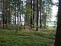Braslaw District, Belarus - panoramio - alinco fan (4).jpg