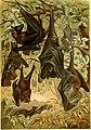 Brehms Tierleben. Allgemeine kunde des Tierreichs (1911) (19791455764).jpg