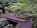 Bridge in Reelig Glen - geograph.org.uk - 1256335.jpg