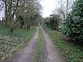 Bridleway to Alder Moor - geograph.org.uk - 367670.jpg
